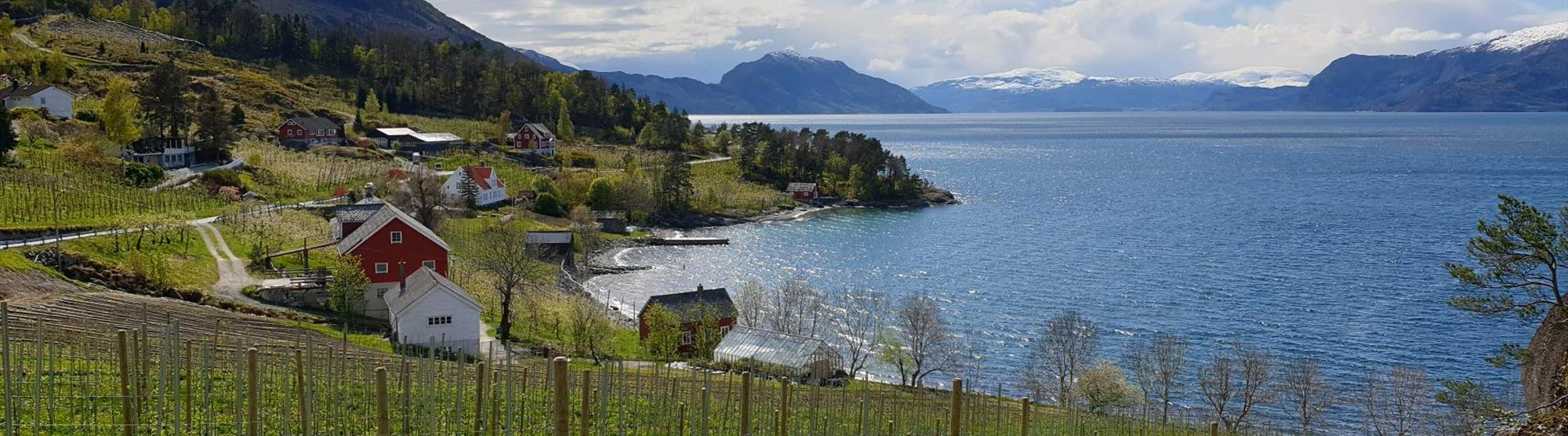 "The ""champagne"" of apple cider comes from Hardanger"